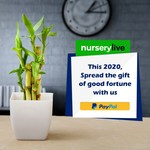 NurseryLive PayPal Offer | Get 100% cashback Upto ₹79 | All Users