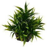 Artificial Bamboo leaves plant (size 7.5 inchs/ 20 cms) with wood Hexagun